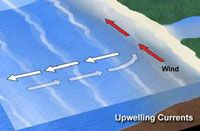 Upswelling occurs when wind displaces surface water, and deeper water replaces it.