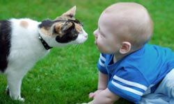 What are you after, cat? (Hint: not the baby's air supply.)