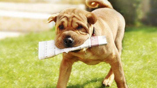 Can you teach an old dog new tricks?