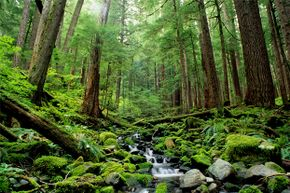 The dense foliage and rugged terrain of Olympic National Park has swallowed many hikers.