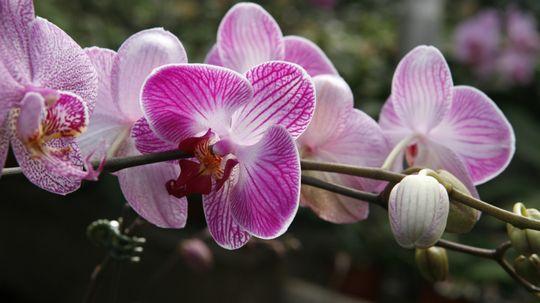 5 Tips for Planting a Fragrant Garden