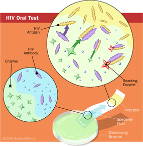 Generalized illustration of oral HIV-testing process