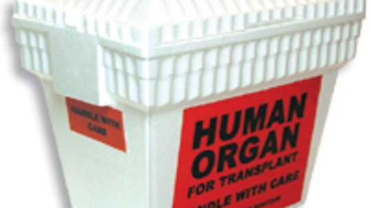 How Organ Transplants Work