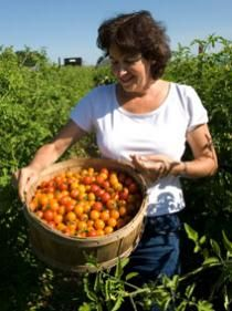 Fruit or vegetable? See pictures of heirloom tomatoes.