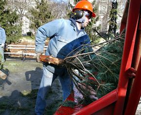 New York Department of Parks and Recreation workers load Christmas trees into a mulch machine for use in compost and landscaping.