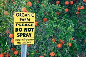 An organic citris farm in California attempts to protect its crops from harmful chemicals.