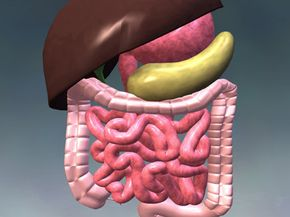 Bodily Organs Image Gallery A gastroschisis or omphalocele occurs when a person is born with his intestines or other internal organs outside his body. See more bodily organ pictures.