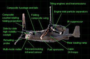 Osprey's external features