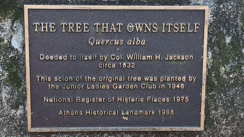 Tree That Owns Itself