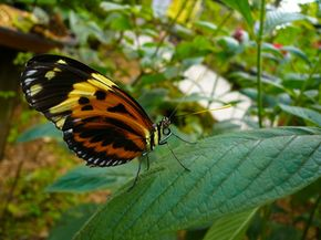 Leafy green plants provide butterflies with shelter and a spot to rest.