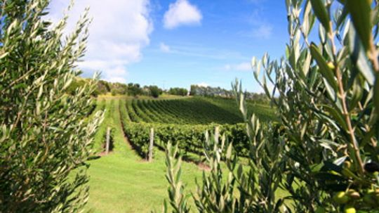 Ultimate Guide to the Auckland Wine Region