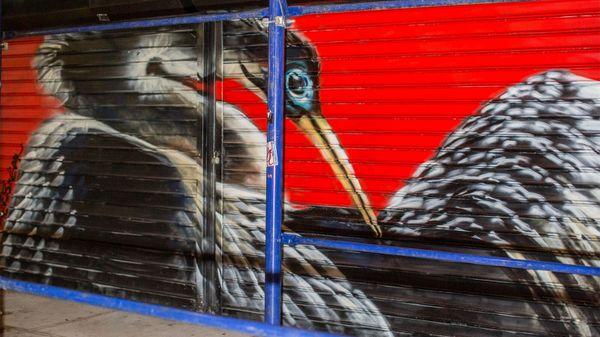 Audubon Mural Project Artists Paint Birds on the Brink