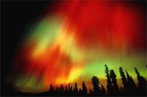 October 2003: The aurora borealis tries to impress some spruce trees in Fairbanks, Alaska.