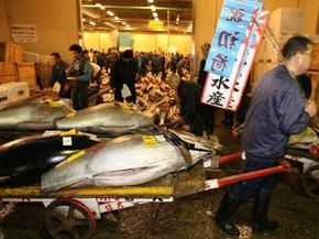 The day's work starts early at Tokyo's Tsujiki Fish Market.