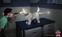 This little puppy is one of three Science Diet used to demonstrate the power of its dog food.