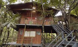 The tallest tree house at the Ariau Amazon Towers Hotel is the Tarzan House. It's about 72 feet up in a mahogany tree and has its own its own private balcony and hot tub.