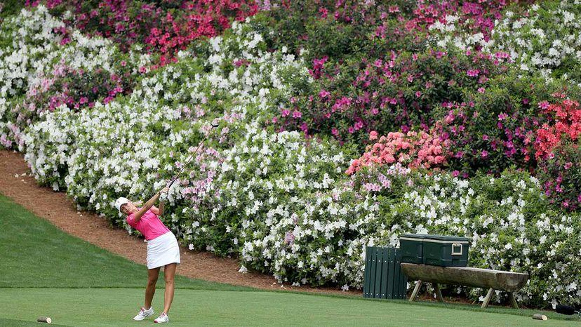 azaleas at the Masters