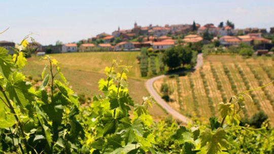 Ultimate Guide to the Abruzzo Wine Region