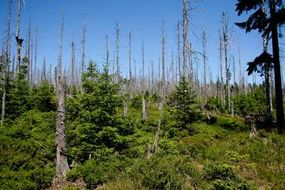 Acid deposition weakens trees and pollutes surface waters.