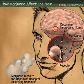 Marijuana acts as neurotransmitter, attaching to dopamine receptors and causing the release of dopamine in the brain.