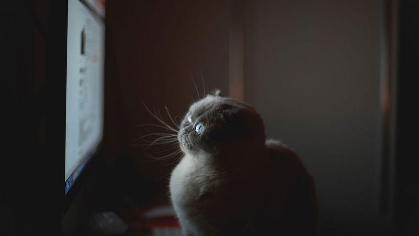 """猫看电视""""width="""