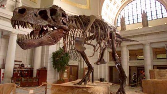 How Do Scientists Determine the Age of Dinosaur Bones?