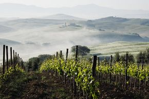 Agritourism at a Tuscan vineyard offers visitors a peek at a romanticized version of farming.