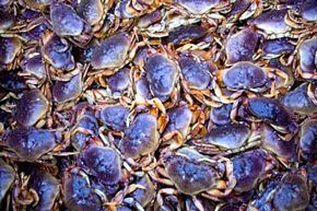 Crab fishing can pay out well in exchange for the hazardous working conditions.
