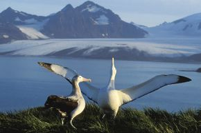 Depending on the context, an albatross can signify good or bad luck according to superstition.