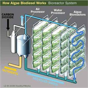 How Algae Biodiesel Works: A Bioreactor System