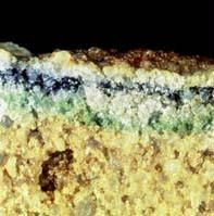 Living cryptoendoliths (green, black, green-blue lines) in a rock sample from Antarctica (left) and a thermophilic, rod-shaped bacteria (about 1 micron long) from a hot spring in Yellowstone National Park (right)