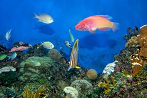 Aquariums are both beautiful and relaxing. See more pictures of aquarium fish.
