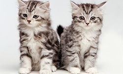 So cute. So cuddly. So dangerous. See more cat pictures.