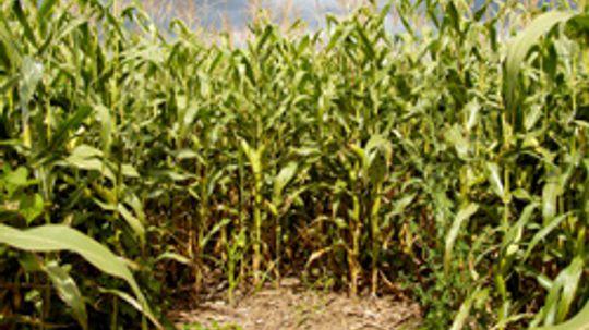 5 Amazing Corn Mazes