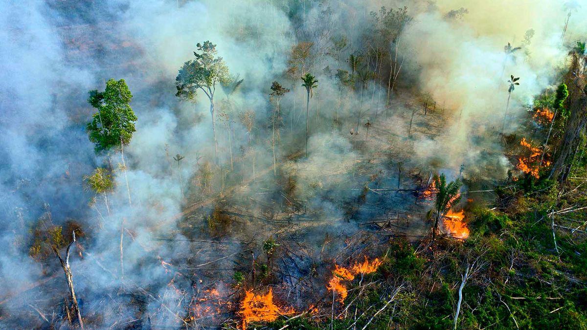 Le feu et la déforestation ont « renversé » l'Amazonie pour être un émetteur de carbone