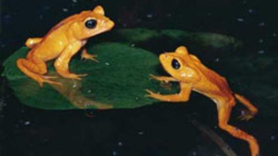 How to Identify Amphibians