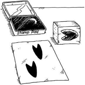 Make animal track stamps.
