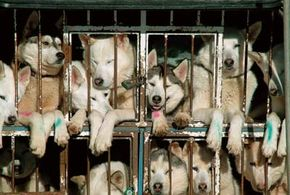 Failure to provide proper living conditions is a part of U.S. anti-cruelty laws.