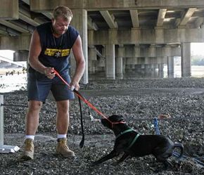 Officer Willie Cirone of the Humane Society of the United States works to save an abandoned dog in New Orleans, after Hurricane Katrina. Animal detectives investigate crimes like neglect or abuse.