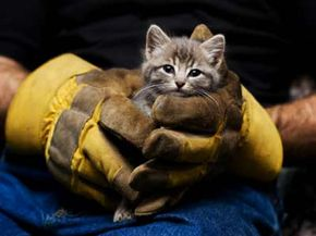 Horrifying cases of animal cruelty make the news, but neglect is the most common form of animal abuse. See more pictures of cats.