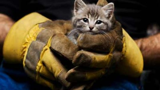 How Animal Rescue Organizations Work