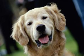 Is your pet pooch really loyal or just as conniving as a cat?.
