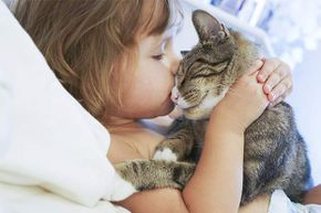 Anyone who's owned a cat knows they do love to be cuddled -- but on their terms.