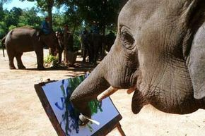 Four-year-old Look Khob appears cheerful as he paints away at the Thai Elephant Conservation Center in Lampang province, Thailand. See more mammal pictures.