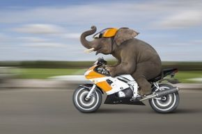 We may never see the day that elephants are living in homes and riding motorcycles, but that doesn't mean they -- and other creatures -- have reached their evolutionary peak.