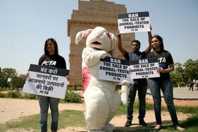 An activist of People for the Ethical Treatment of Animals (PETA), dressed as wounded rabbit, protests animal testing for cosmetics at the historical India Gate in New Delhi.
