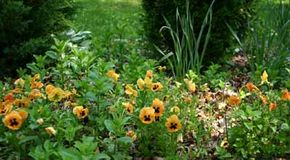 Annual flowers bloom all summer long, giving constant color where perennials bloom once and then fade away.