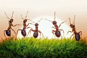 How many ants can you identify?