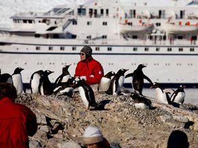 A tourist gets a closer look at Antarctica's penguins.