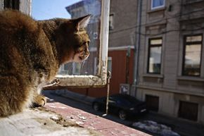 If you own a pet, ask your landlord if it's all right to have one in the apartment.